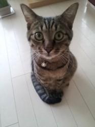cat_o